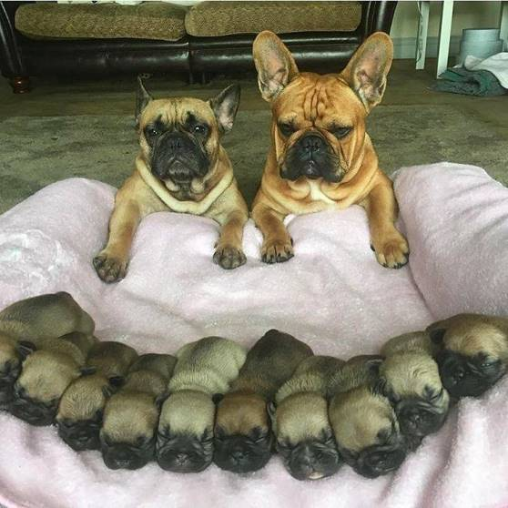 Family Photo Canine Style From World Of Adorable Animals Facebook Page