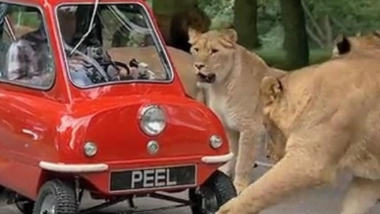 Peel P50 And Lions
